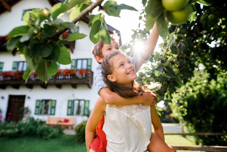 Äpfel frisch vom Baum