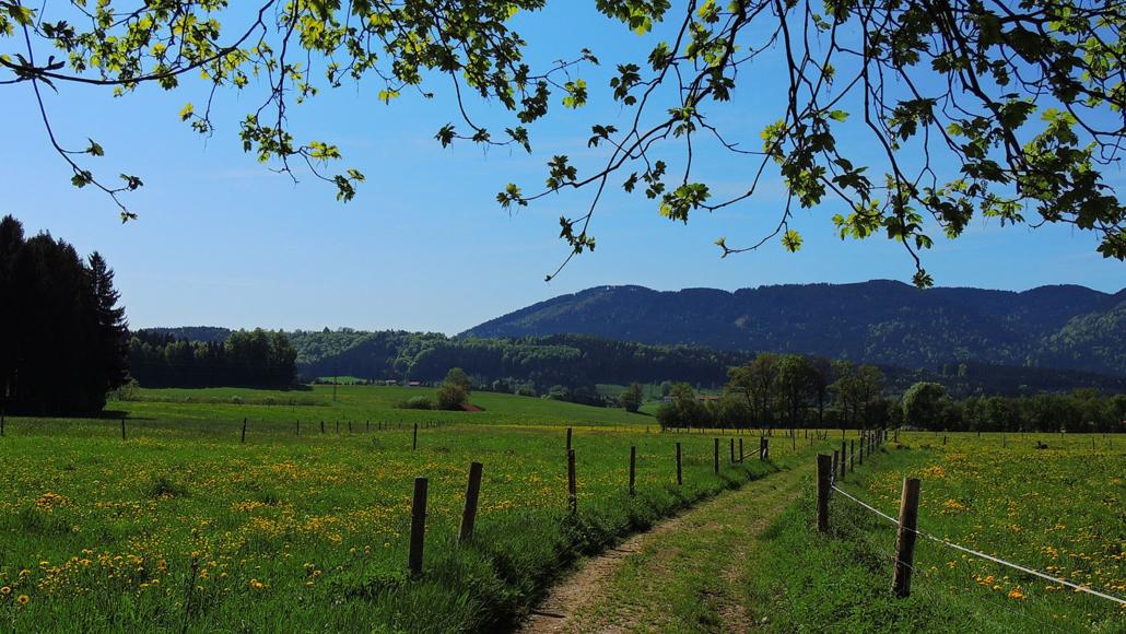 Frühlingswanderweg