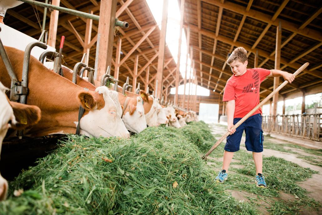 Tiere füttern im Stall