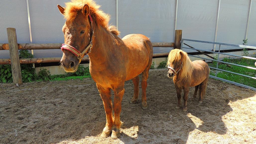 Pferd und Pony dürfen gestreichelt werden