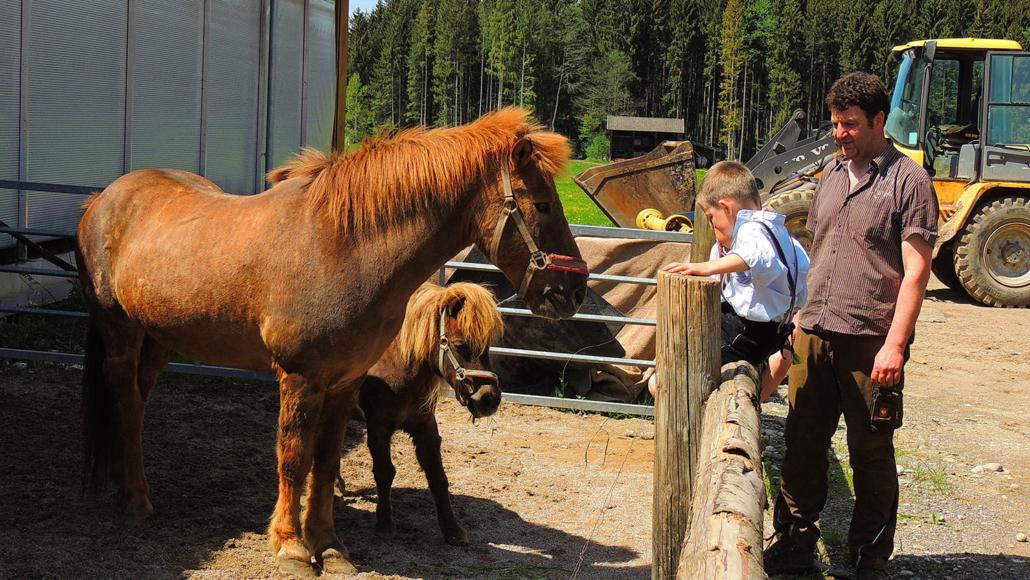 Pferd und Pony zum Streicheln