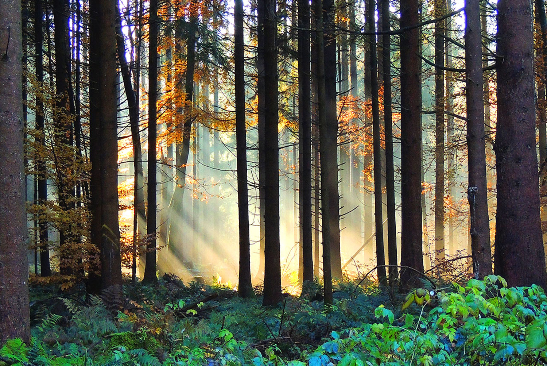 Herbstlicher Waldzauber